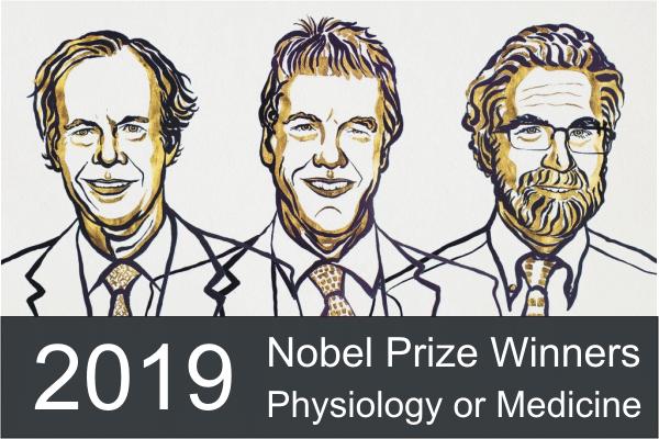 Oxygen | 2019 Nobel Prize in Physiology or Medicine